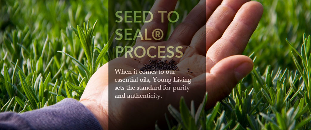 YL - Seed to seal process